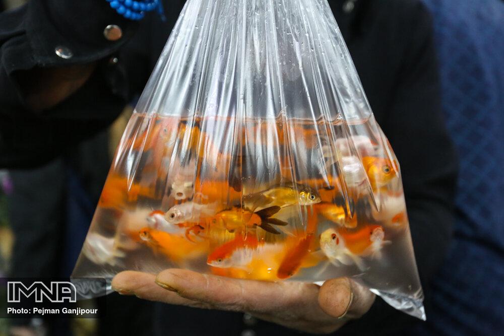 خدمات شهرداری اردبیل در جمع آوری ماهی و سبزههای نوروزی