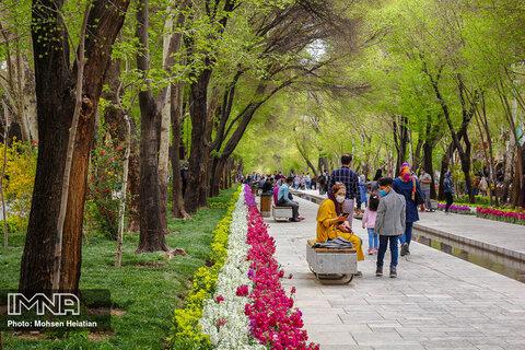 عطر بهار در نصف جهان