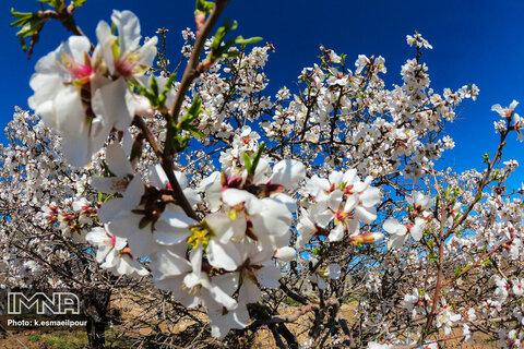 هوای بهاری اصفهان سالم است