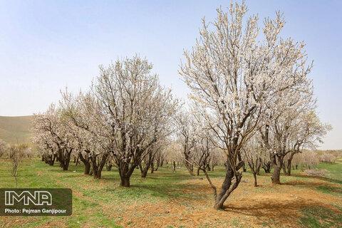 طبیعت بهاری چهارمحال و بختیاری