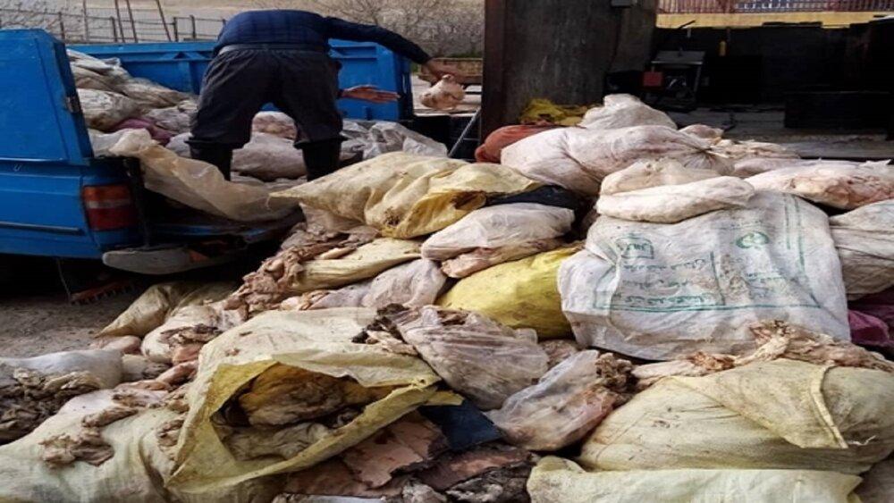 کشف و امحای بیش از ۶ تن پوست مرغ در کرمانشاه