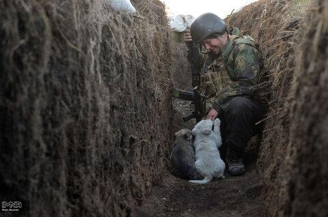 بازی کردن یکی از اعضای نیروهای مسلح اوکراین  با توله سگها در منطقه جنگی دونتسک اوکراین