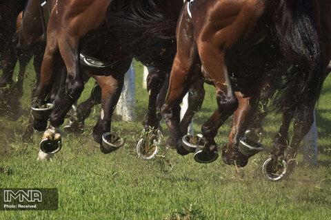 لحظهای از دویدن اسب های مسابقه
