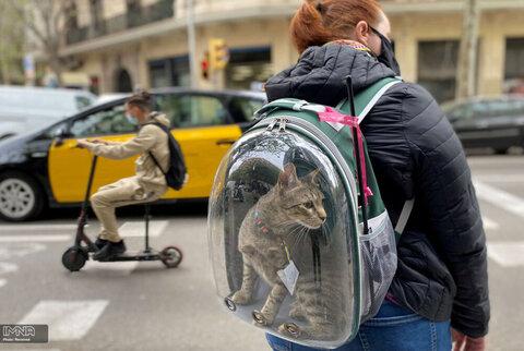 یک زن با پوشش ضد کرونایی برای خود و گربه اش در بارسلونا، اسپانیا