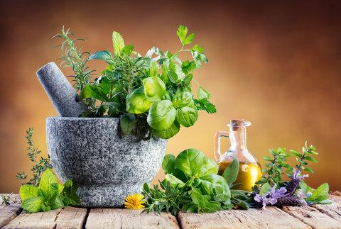 ۵ گیاه آپارتمانی مفید برای سلامتی