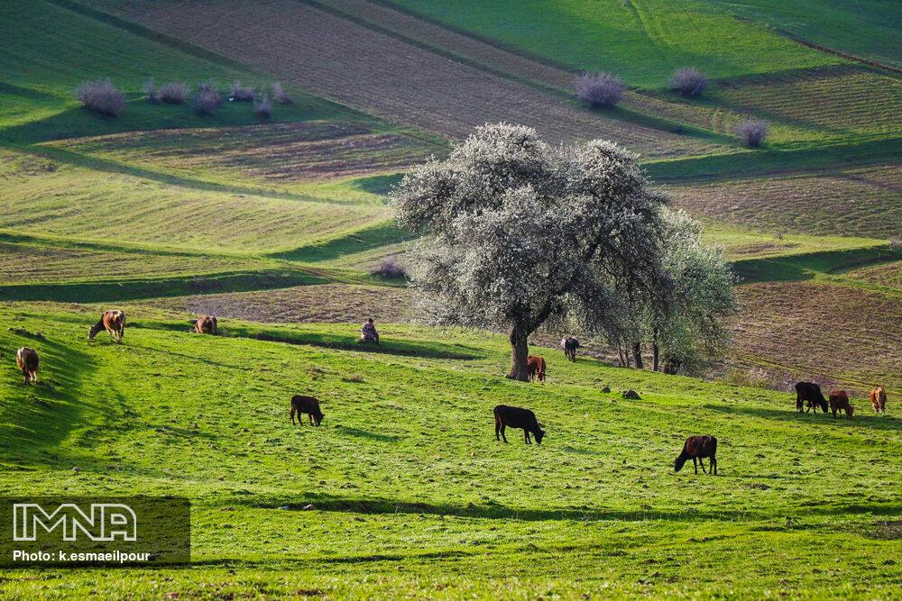 """چهره زیبای طبیعت بهاری """"کلیبر""""- آذربایجان شرقی"""