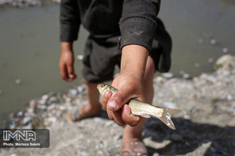 Mass death of fish trapped in dried-up Zayanderud River