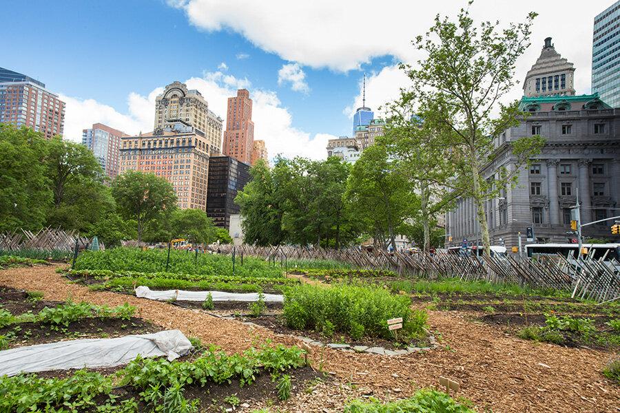 اهمیت زمینهای خاکی در بهبود کیفیت زندگی شهری