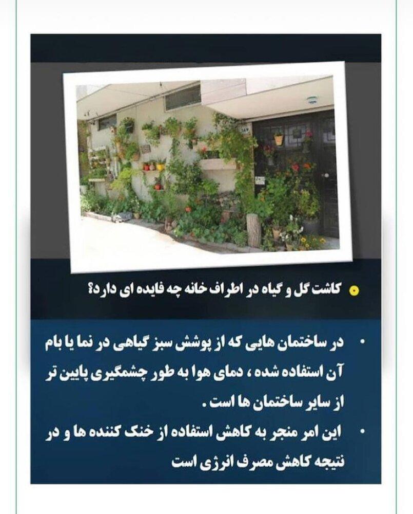 اثرات مثبت کاشت گل و گیاه در اطراف منازل