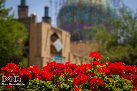 جشنواره گل سرخ در چهارباغ