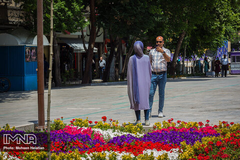 Rose bushes lined up in Isfahan's neighborhoods