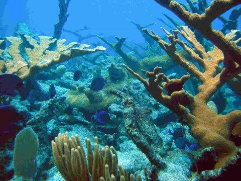 تاثیر اسیدی شدن اقیانوس بر آبزیان