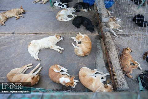 کشف لاشههای سوخته ۱۵ قلاده سگ در شاهدشهر