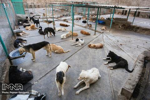 احداث پناهنگاه نگهداری سگ های بدون صاحب در تالش