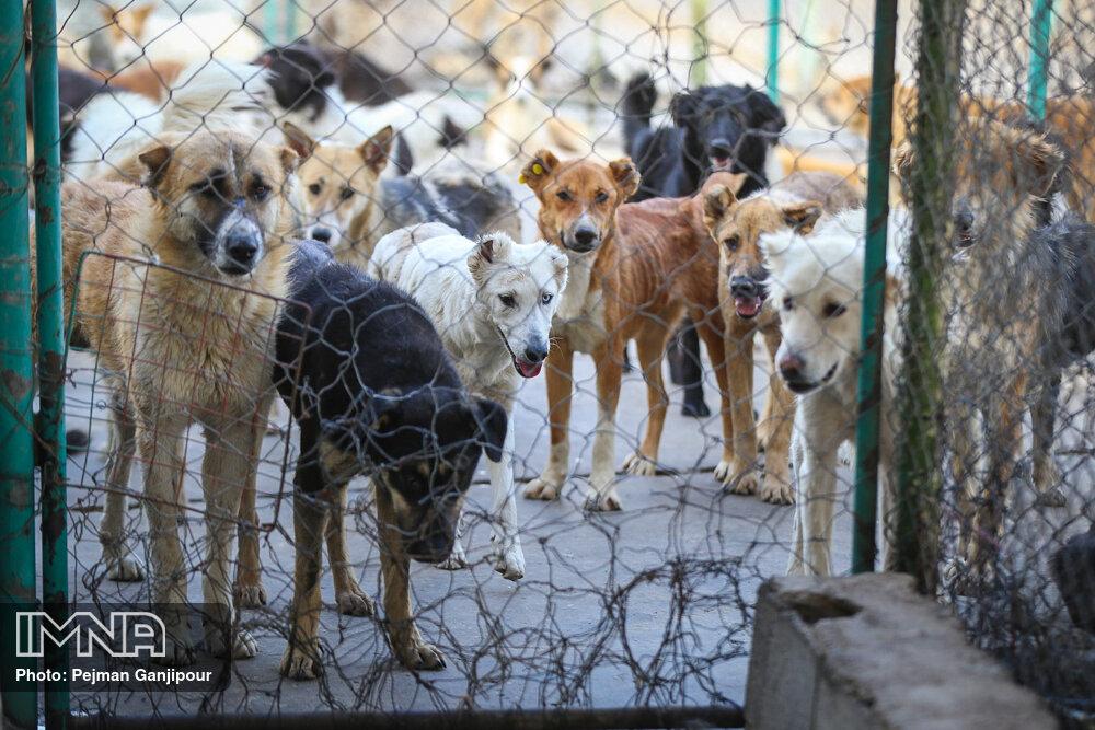 کشتار سگهای بدون صاحب در اصفهان نداریم