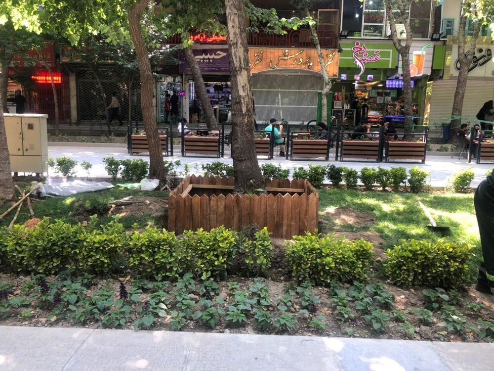 تدابیر ویژه برای نجات درختان چهارباغ