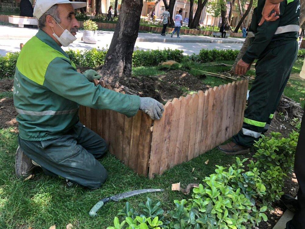 راهکارهای جلوگیری از سطحی شدن ریشه تعدادی از درختان شهر