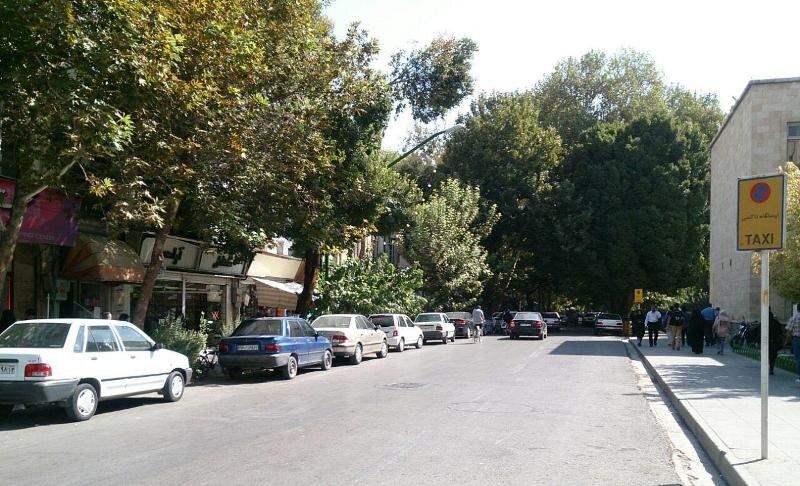 ماجرای سقوط نارون ۴۰ ساله خیابان سپه چه بود؟