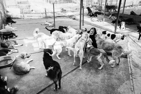 ساماندهی سگهای بیسرپرست اصفهان