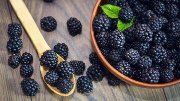 خواص توت سیاه و برگ توت سیاه برای دیابت و کلسترول + مضرات، خواص درمانی و عوارض توت سیاه