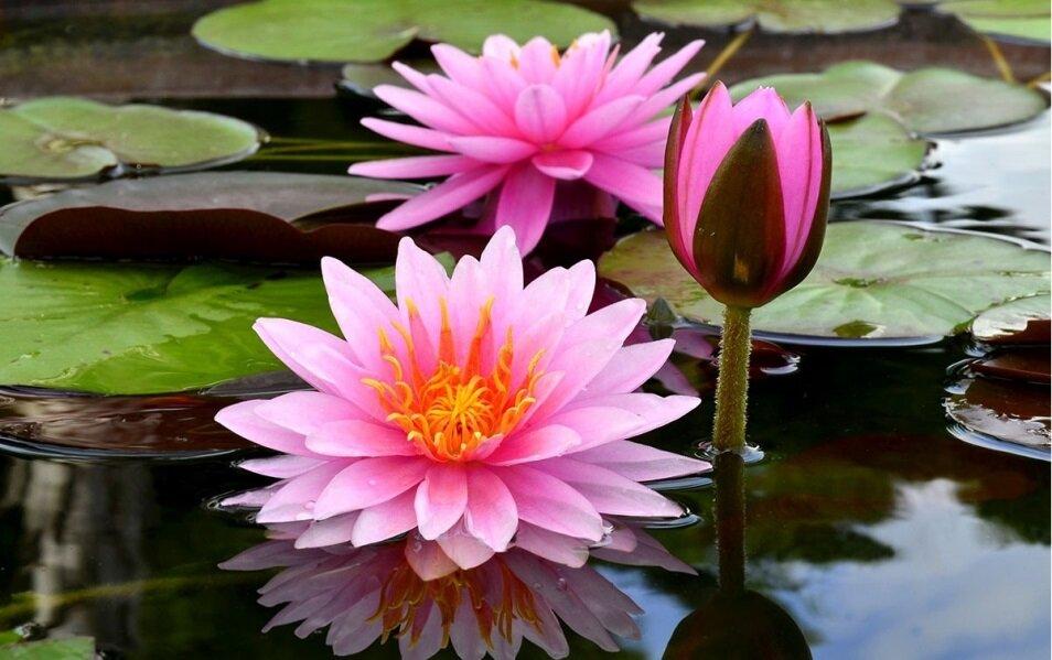 روز جهانی گل و گیاه چه روزی است؟ + تاریخچه و هدف