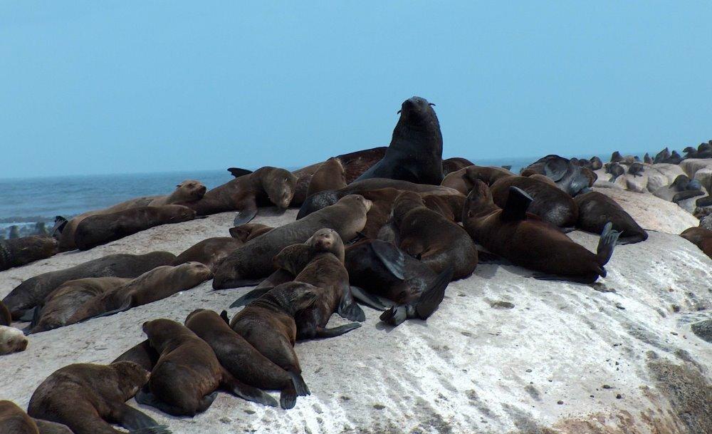 گشتی در جزیره هنری فکهای دریایی