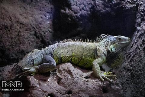 غار آکواريوم گنجنامه همدان