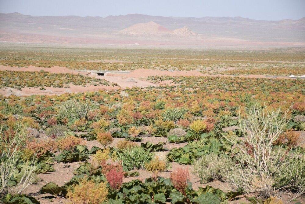 الگوی تاریخی یزد ناجی طبیعت از دست رفته ایران است