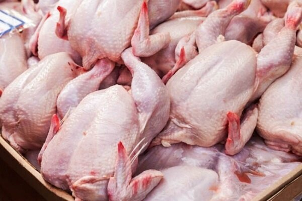 دولت بازار مرغ را رها کرده است