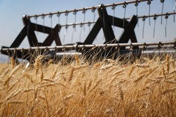 آبی که در گندم دورریز میشود برابر نیاز آب شرب کشور است