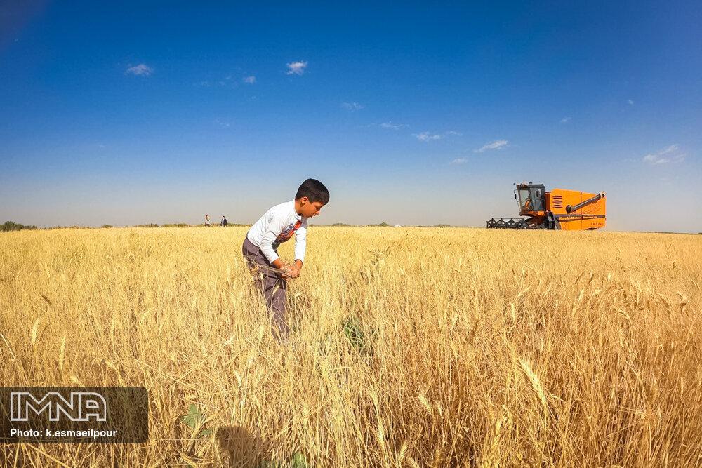 ۷۳۶ هزار تن گندم از بندر امام به کشور وارد شد