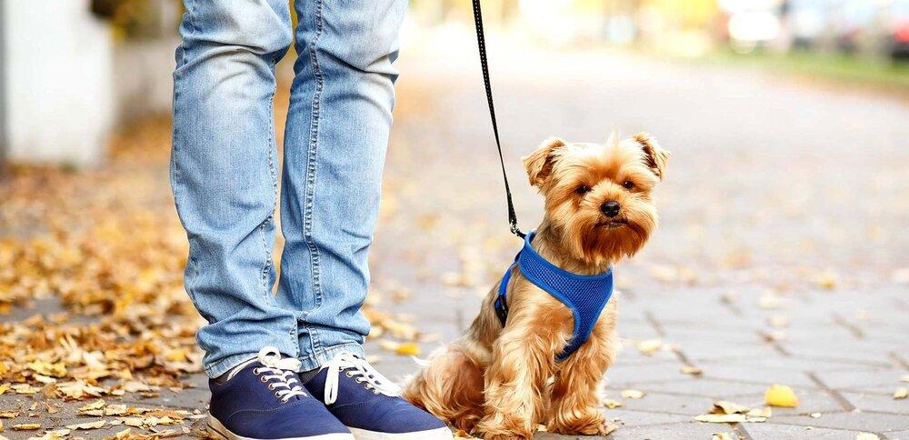 جزییات ماجرای برخورد پلیس با سگ گردانی
