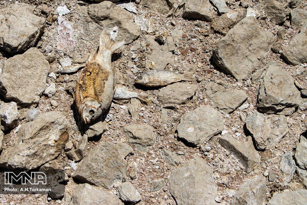 تراژدی خشکسالی؛ گرسنگی و مرگ حیاتوحش