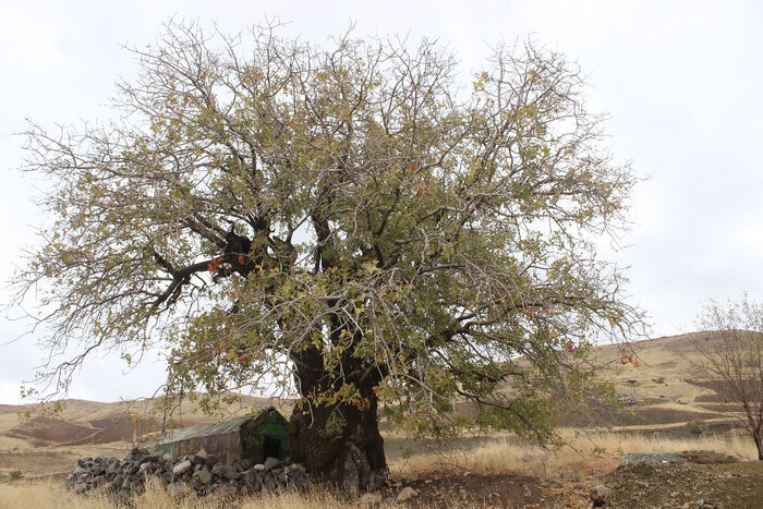 ابلاغ مراتب ثبت ملی ۶ اثر طبیعی به استاندار کردستان
