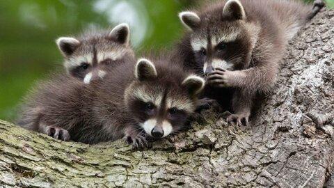 Funny Animal Photo Contest 2021