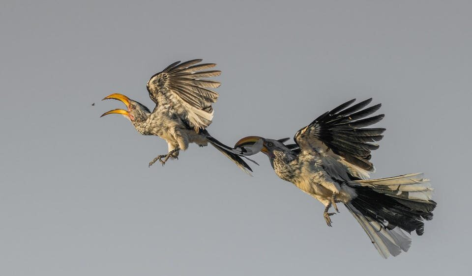 Bird Photographer of the Year 2021 finalists