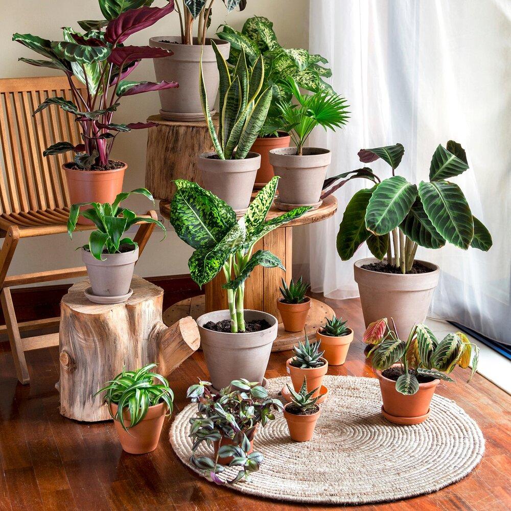 گیاهان آپارتمانی مفید برای سلامتی + عکس و شرایط نگهداری