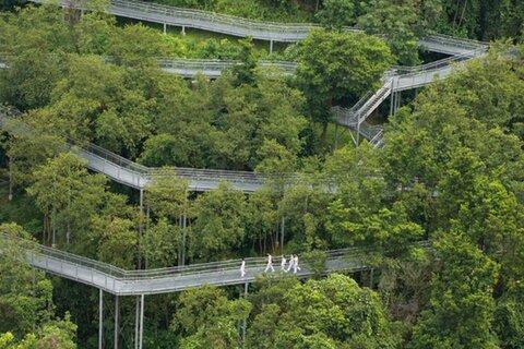 ظهور شهر جنگلی با جادههای زیرزمینی در سنگاپور