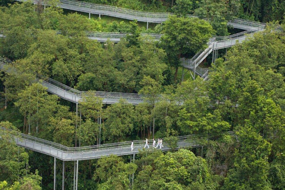 ظهور شهر جنگلی با جادههای زیرزمینی در سنگاپور+ فیلم