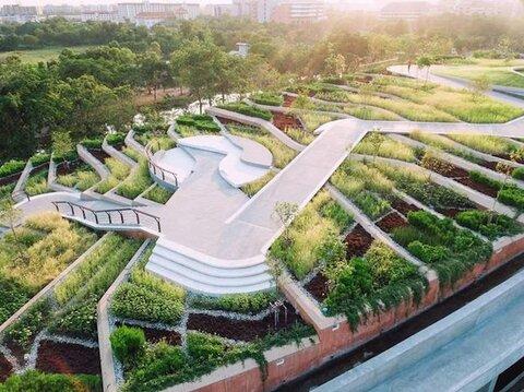 بزرگترین بام سبز آسیا؛ شالیزاری بر فراز یک دانشگاه