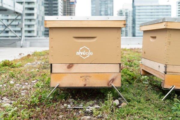 ۲۰۰ هزار زنبور عسل در خوابگاههای دانشجویی!