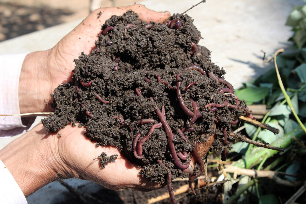 Vermicompost production innovative strategy by Isfahan's waste management organization