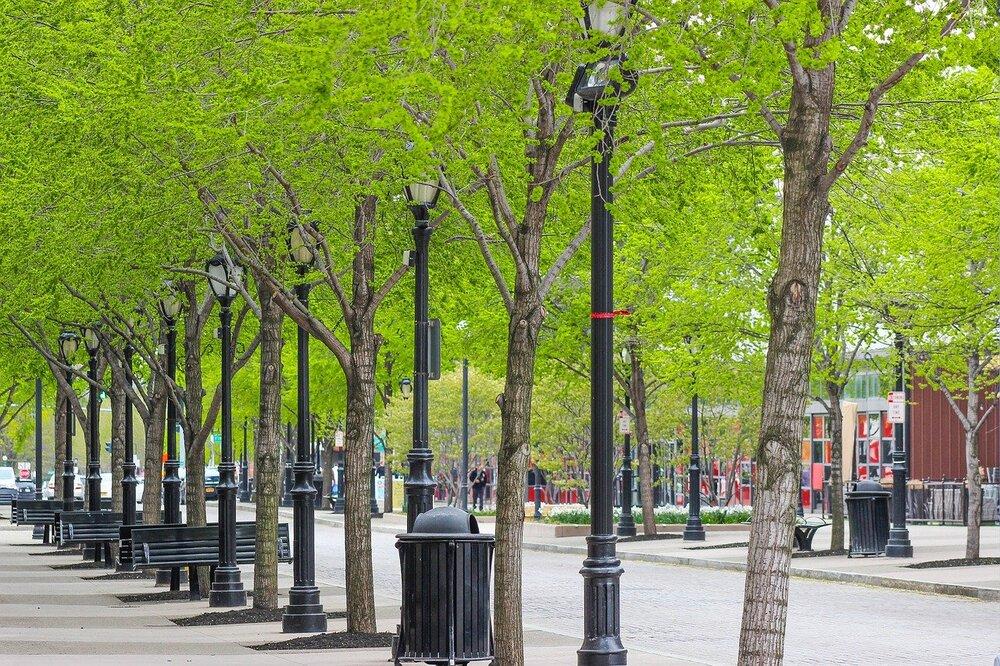 درآمدی کوتاه بر خاستگاه درختکاری و مزایای آن برای شهرها
