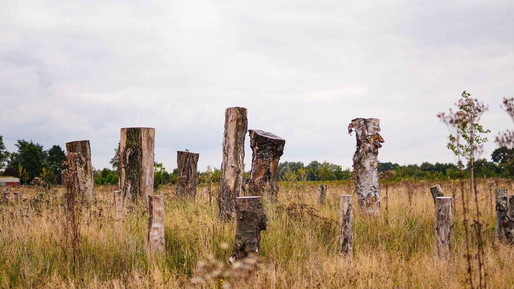 پیدایش اولین گورستان دوستدار طبیعت در بلژیک