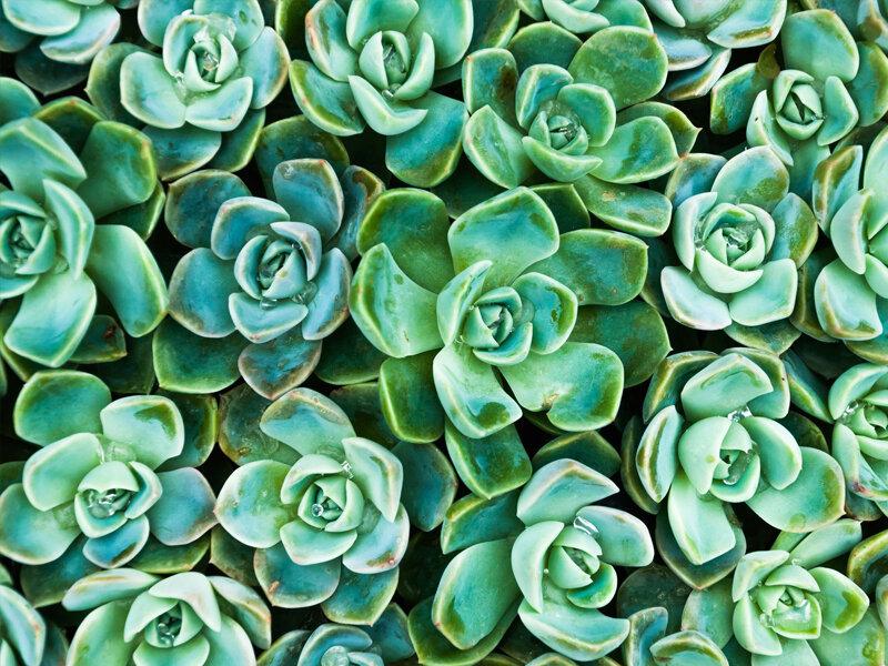 تاثیر موسیقی برای رشد گیاهان