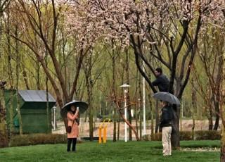 باران به استقبال بهار می رود
