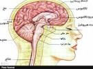 هیجان و استرس؛ تحریک کننده  دستگاه عصبی سمپاتیک